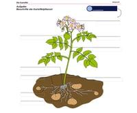 Kartoffel_MedienLB_page_1_RGB